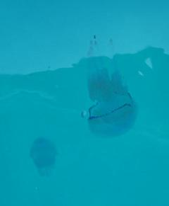 Medusa4.jpg