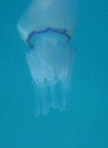 Medusa9.jpg