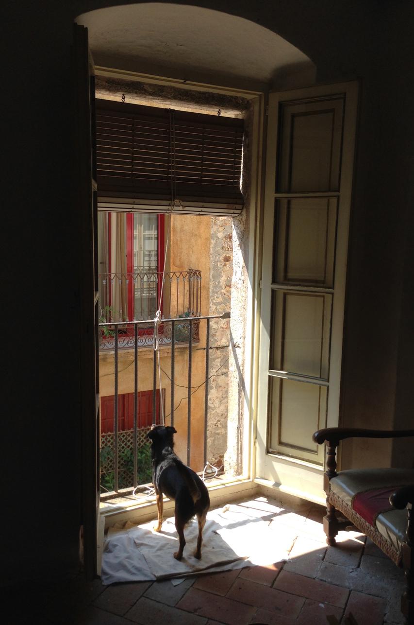Studio-guard-dog.jpg