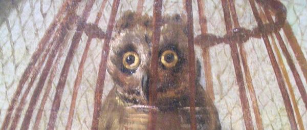 OwlCloseup.jpg