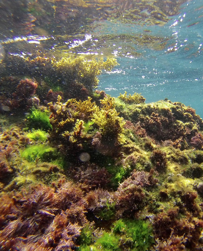 undersealandscape.jpg